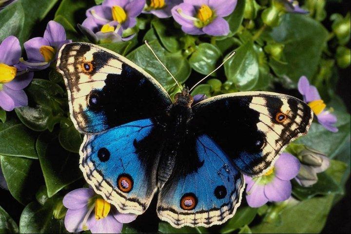farfalle-48