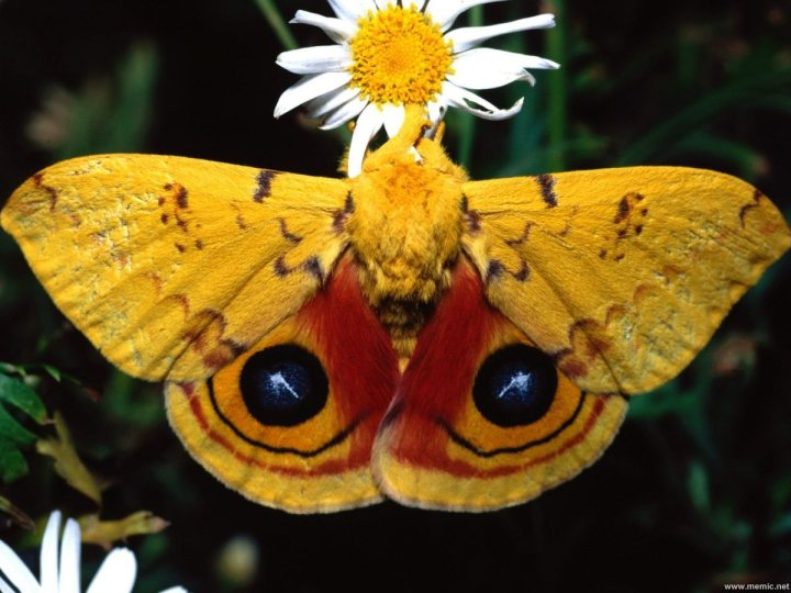 farfalle-49