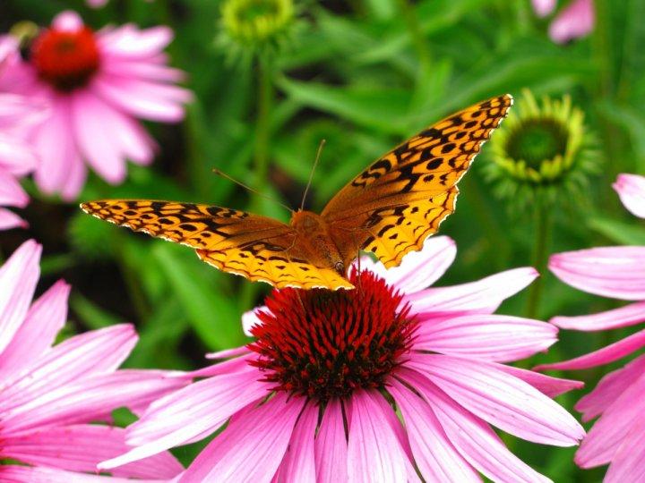 farfalle-50