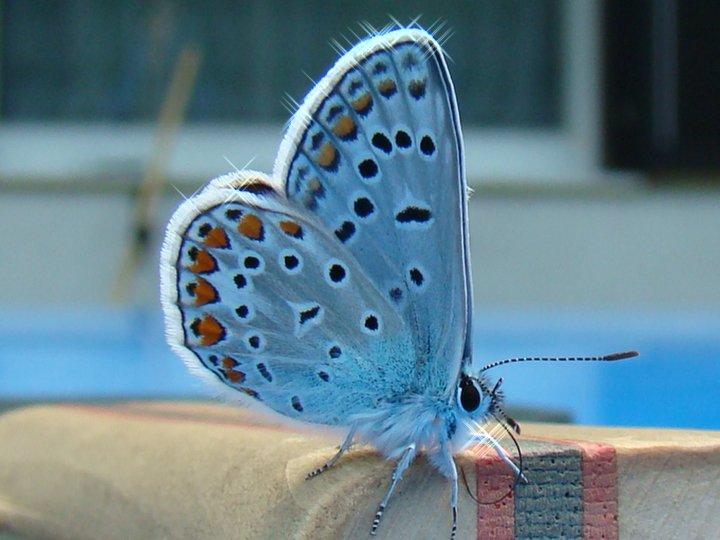 farfalle-51