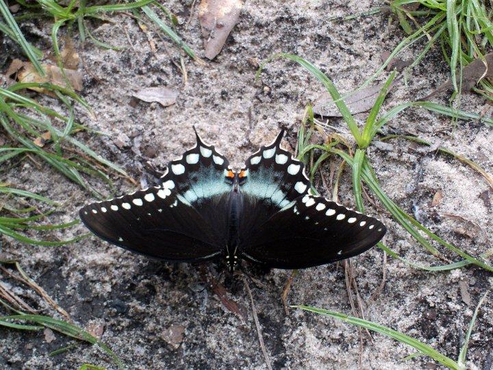 farfalle-53
