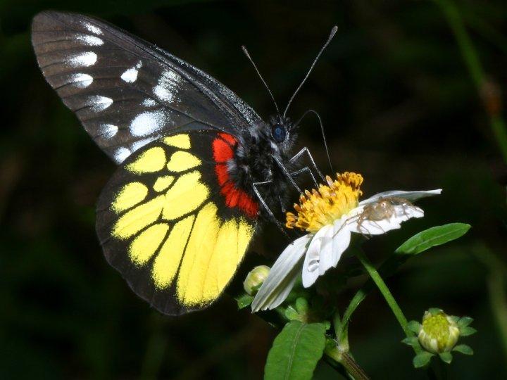 farfalle-54