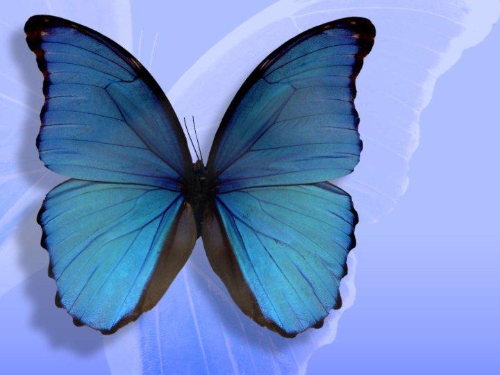 farfalle-55