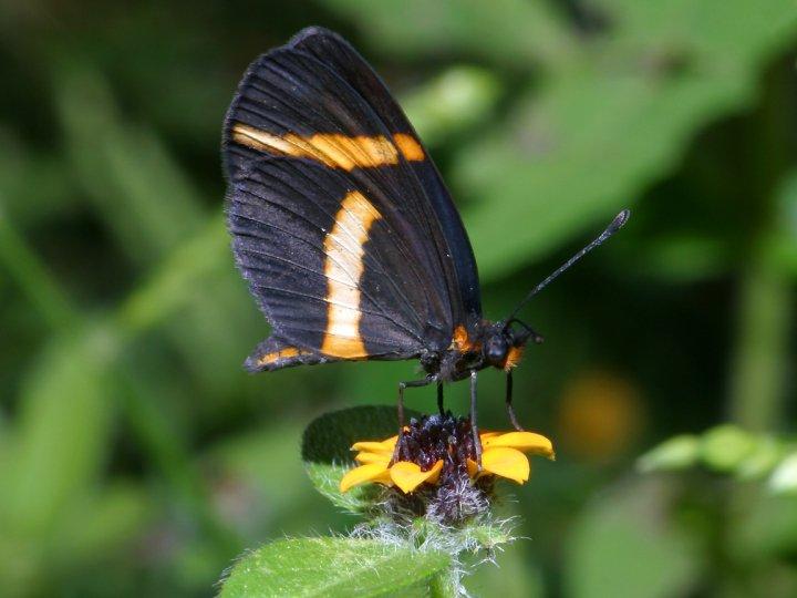 farfalle-57