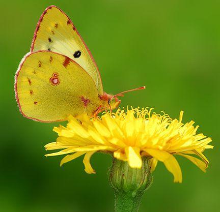 farfalle-6