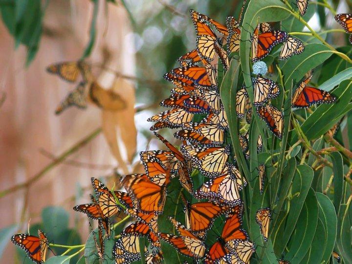 farfalle-60