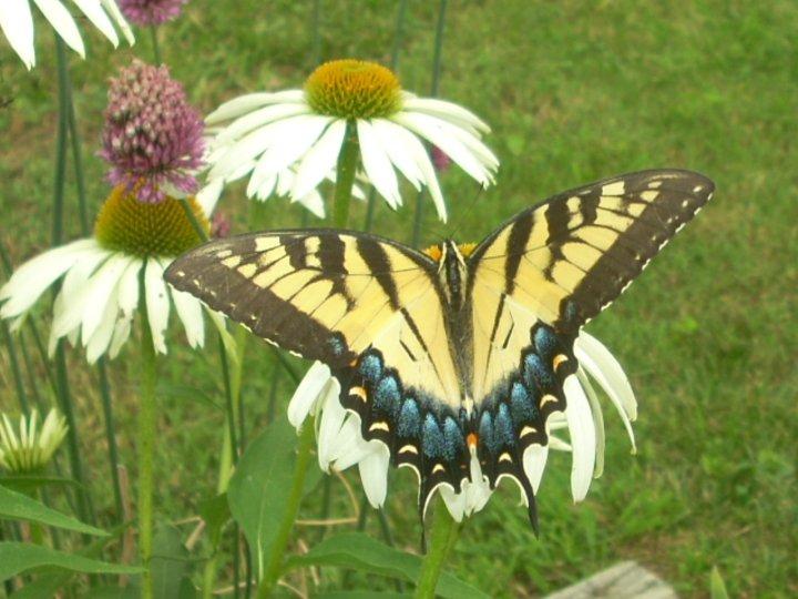 farfalle-61