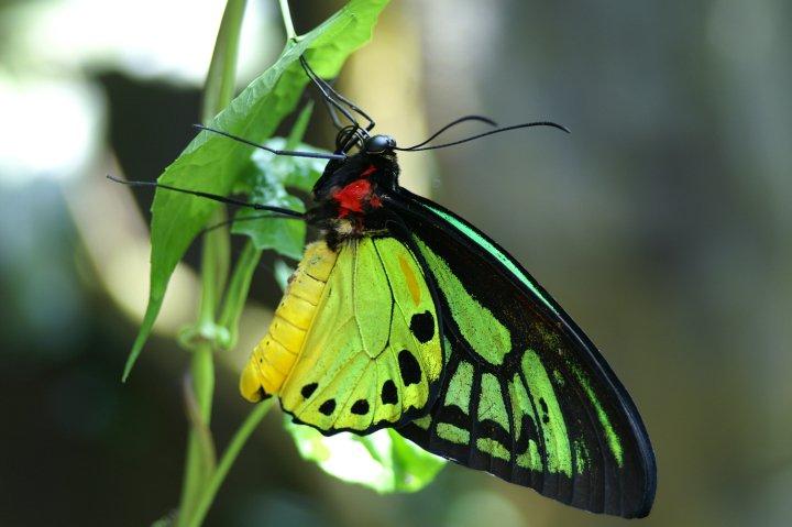farfalle-63