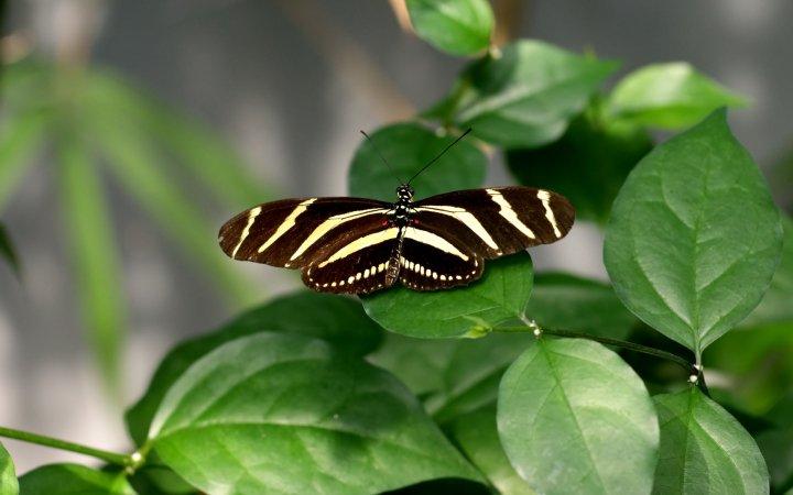farfalle-64