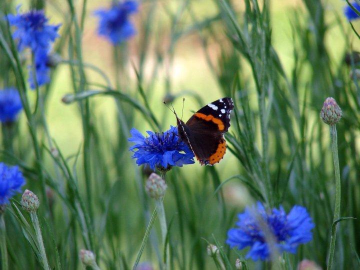 farfalle-65
