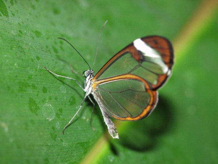 farfalle-66