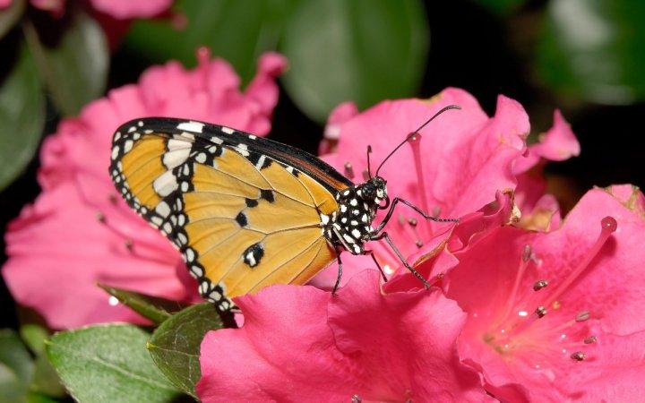 farfalle-67