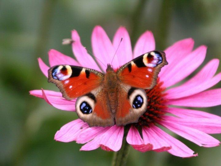 farfalle-68