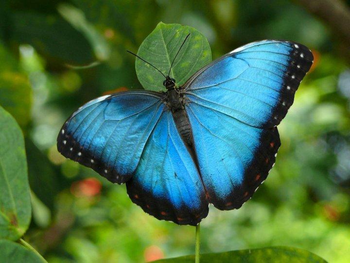 farfalle-72
