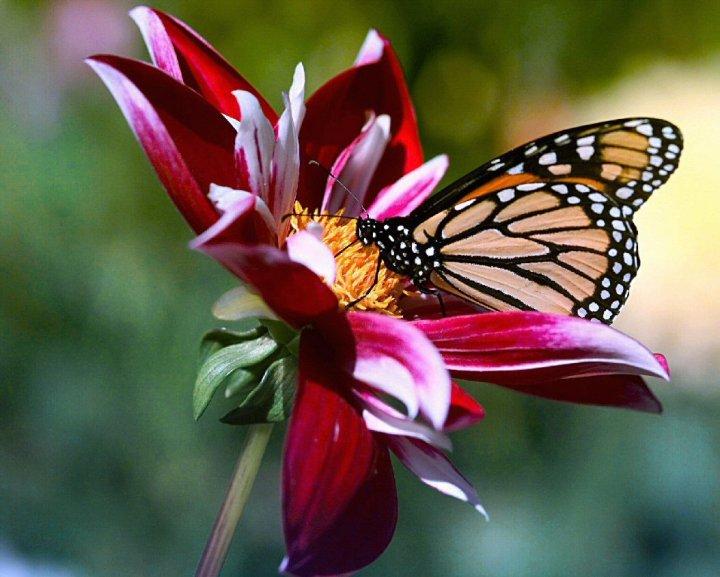 farfalle-73