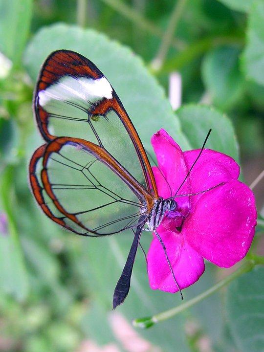 farfalle-75