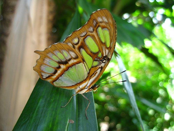 farfalle-77