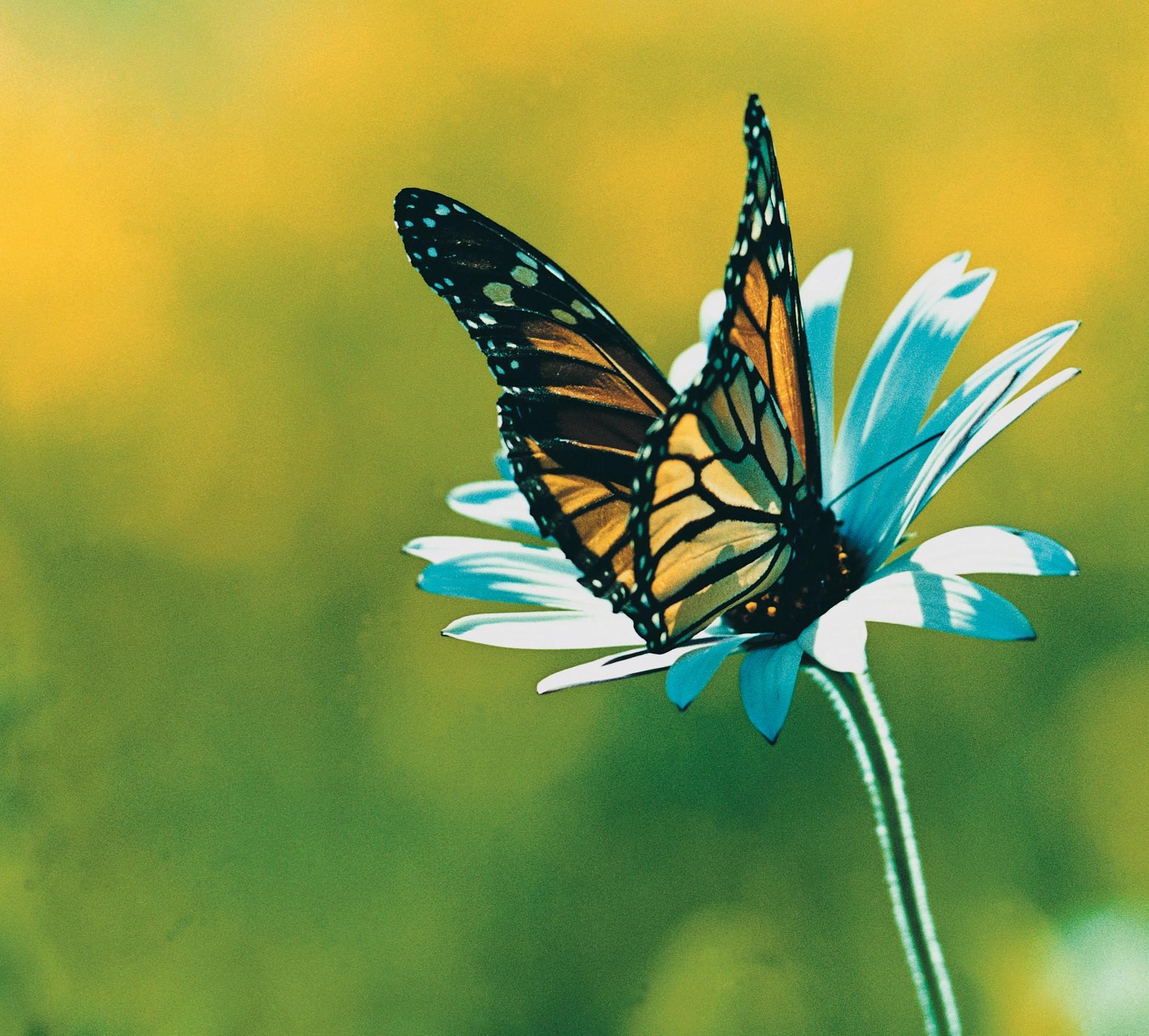 farfalle-8