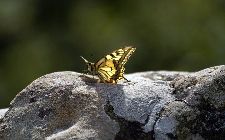 farfalle-80