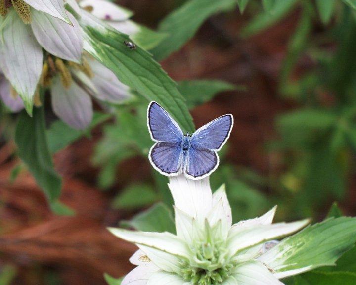 farfalle-81