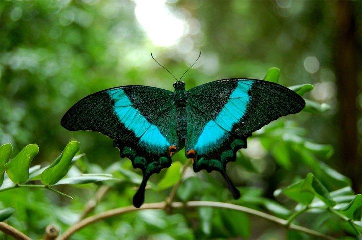 farfalle-82