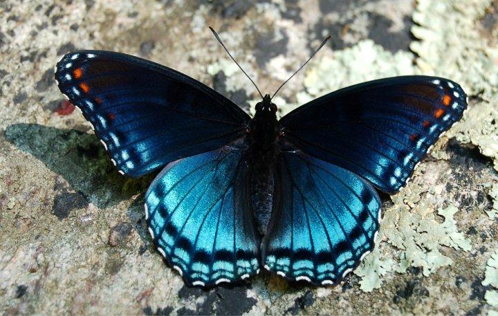 farfalle-83