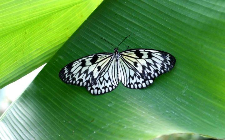 farfalle-86