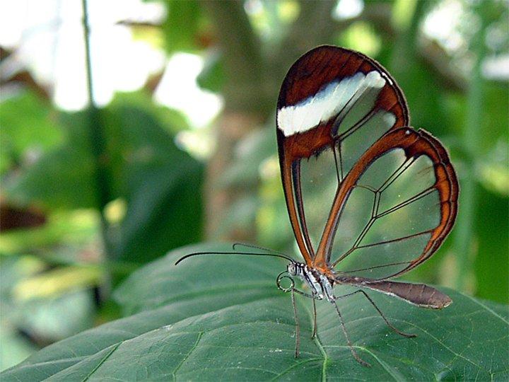 farfalle-87
