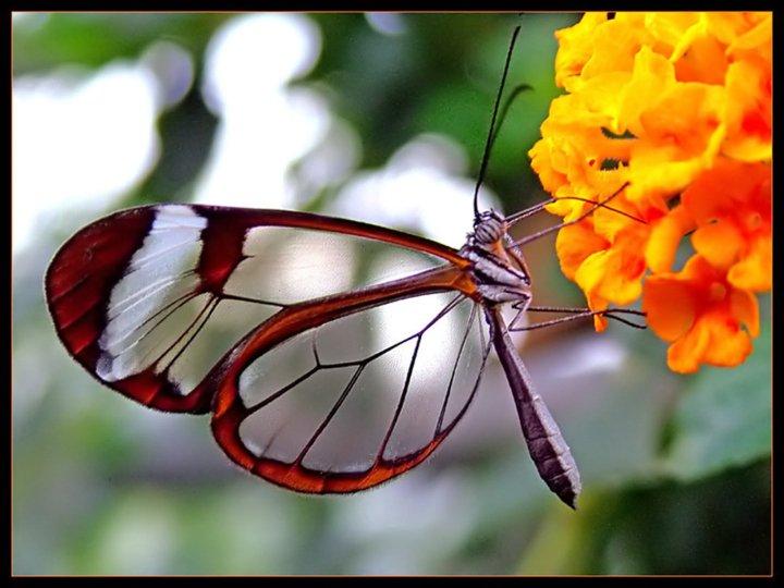 farfalle-88