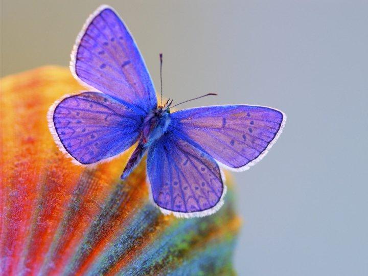 farfalle-89
