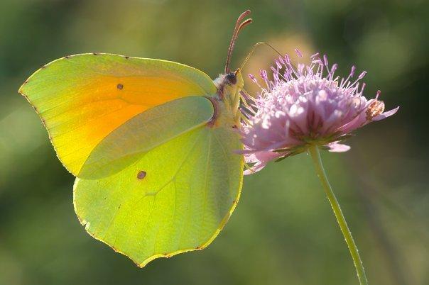 farfalle-9