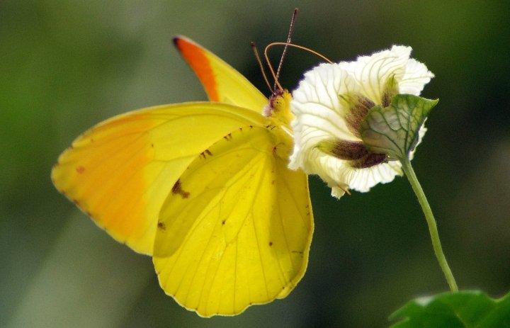 farfalle-90