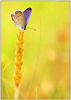 farfalle-94