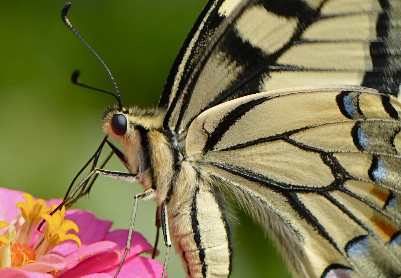 farfalle-95