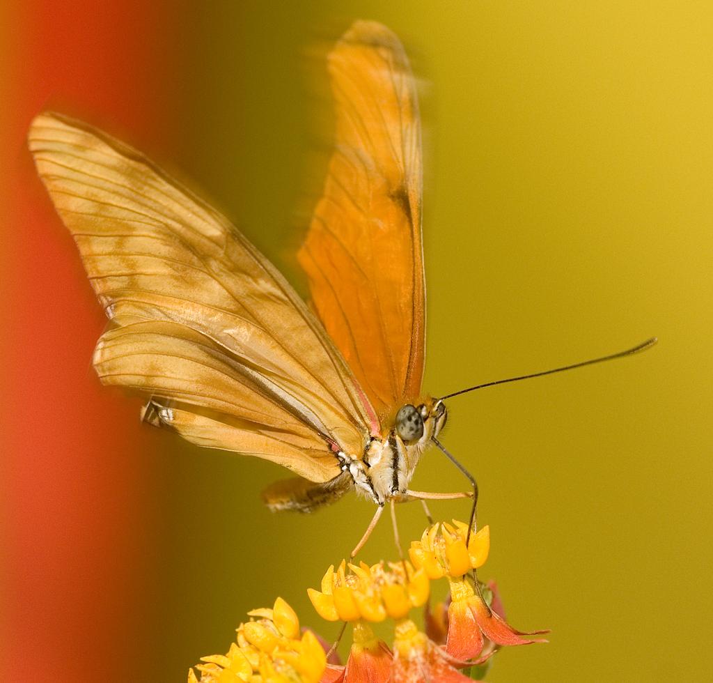 farfalle-99