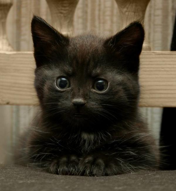 gatti-15