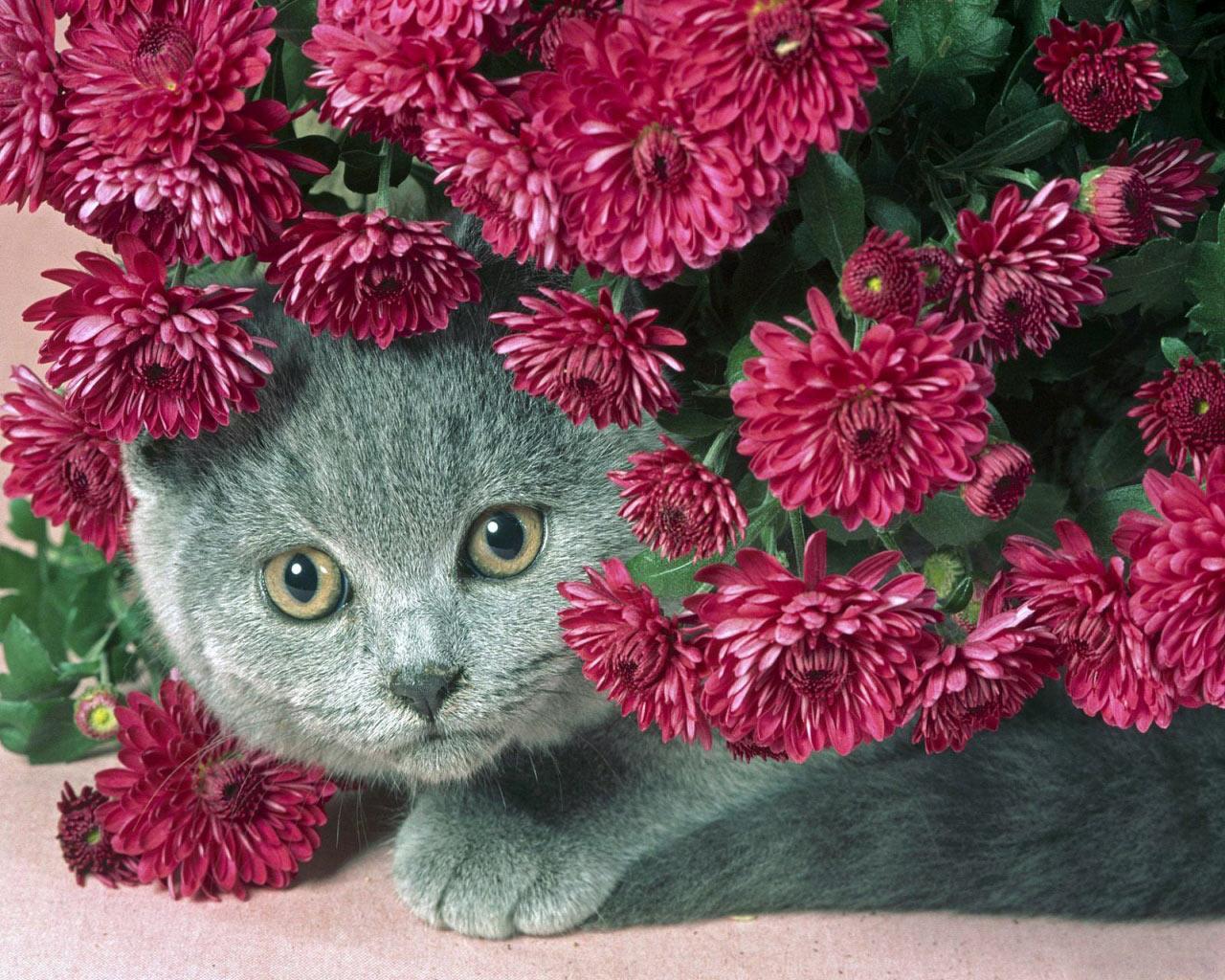 gatti-153