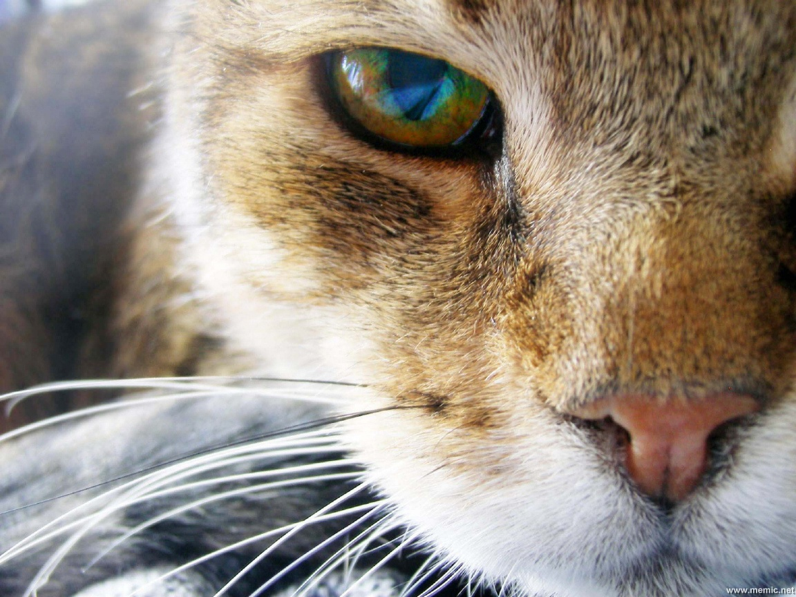 gatti-194