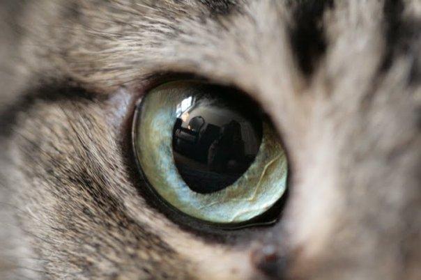 gatti-5