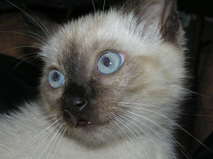 gatti-77
