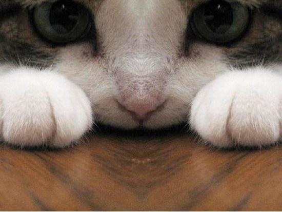gatti-9