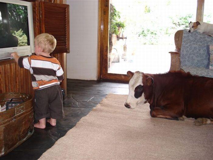 animali-e-bambini-vegamami-altervista-org-54