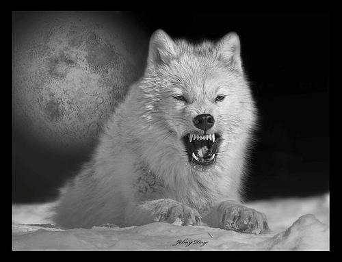 wolf-136