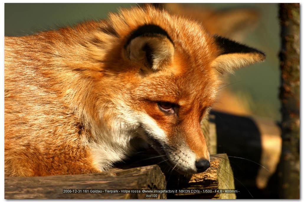 fox-107