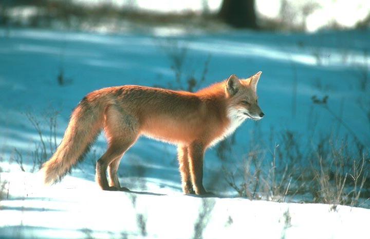 fox-25