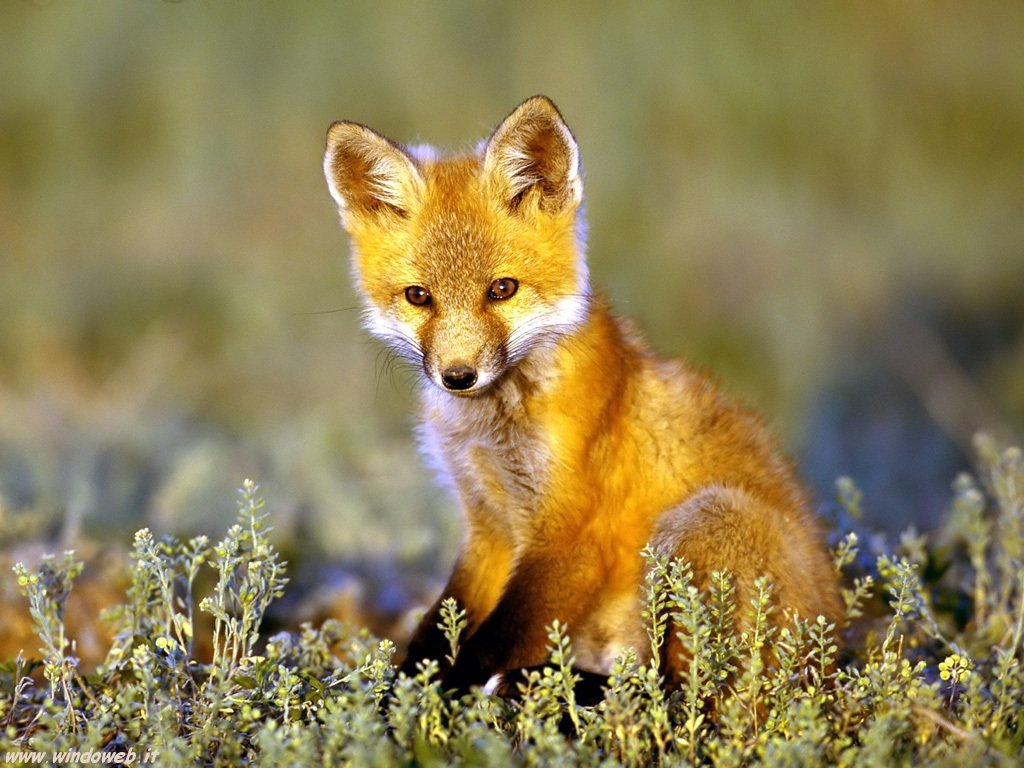fox-44