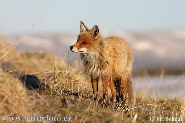 fox-49