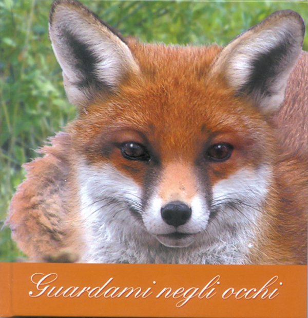 fox-51