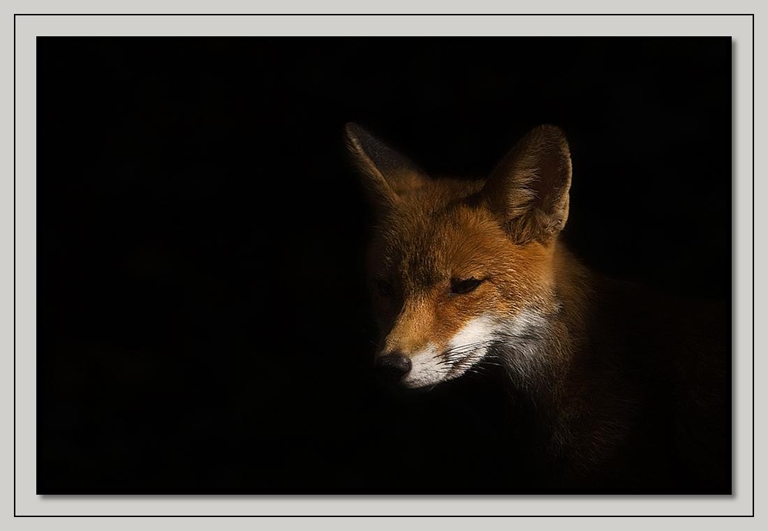 fox-53