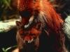 fox-102
